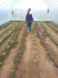 Tee patrolling the second week of seedlings