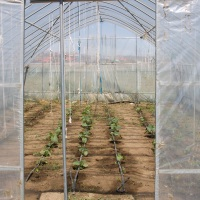 A Greenhouse in Mongolia - Our Project for Peace, Sustainability and Development